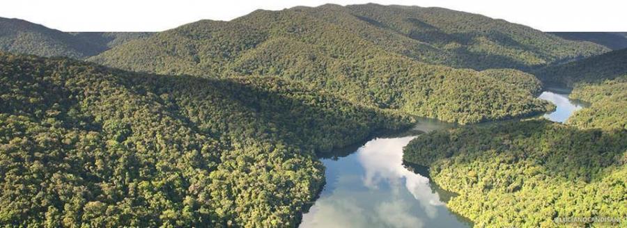Dia Nacional de Proteção das Florestas!